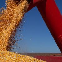 IBGE prevê safra recorde de 264,5 milhões de toneladas para 2021